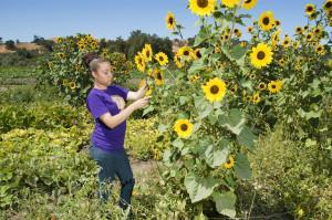 Past Farm People's Grocey farmer Braley in front of sunflowers in field