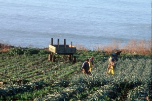 Ag Roots - Cloverdale workers in field with ocean background (2004)