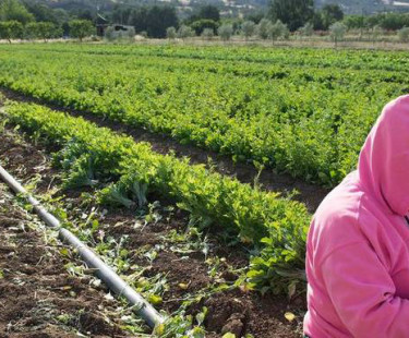 Helping farms thrive link